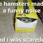 lolcat_scared